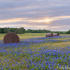 Hay bales and bluebonnets