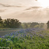 Sunrays and Bluebonnets
