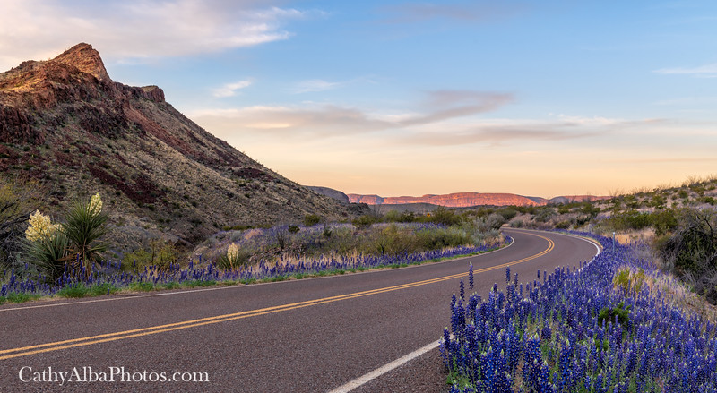 Bluebonnet lined roads
