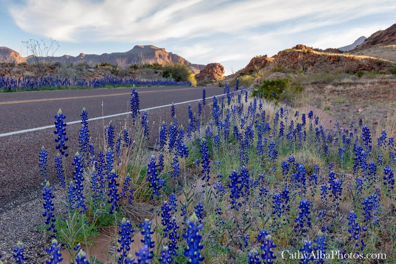 Bluebonnet lined roads.