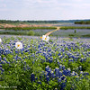 Spring in the  Hill Country