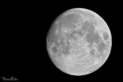 Full Moon - Risen