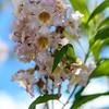 Flowers at a rest stop )Maverik)