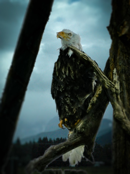 Eagle on the Range