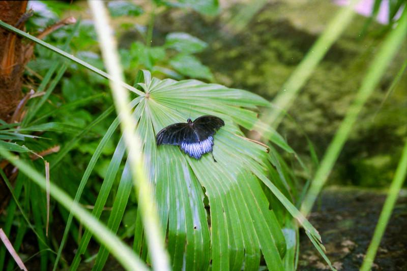 Niagara Butterflies