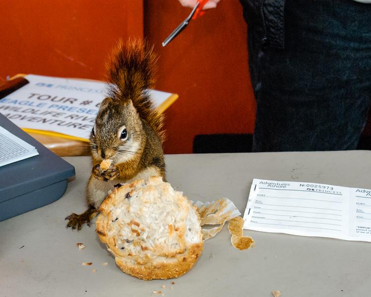 Mr. Squirrel Hard At Work