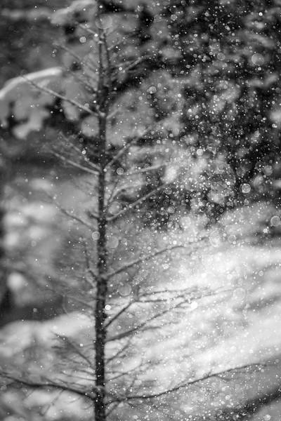 Falling Snow Catching the Sun