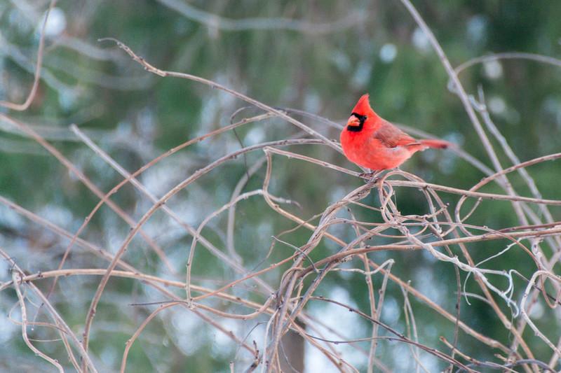 Cardinal after #Snowzilla