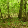 Human uses: logging, camping