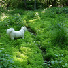 Young stilt grass