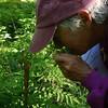 Ann examines royal fern
