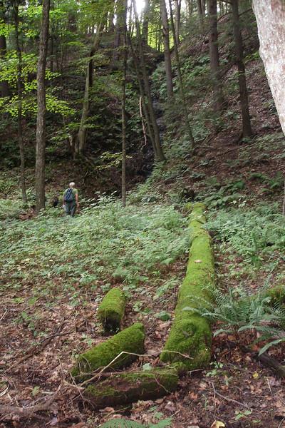Decomposing log, gully