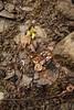 Overturned Rock reveals Chipmunk Cache