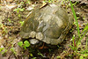another wood turtle