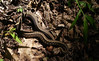 8. Snake in overgrown path