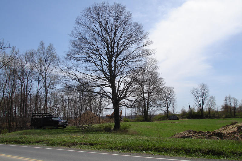 1.Taken from a telephone pole on the north side of Birch Road about 50 feet east of Sand Hill Road near spot elevation 362.5 shown on the frontage grading plan.  Shot aimed south toward the northeast corner of conservation easement and shows a large tree proposed for protection.