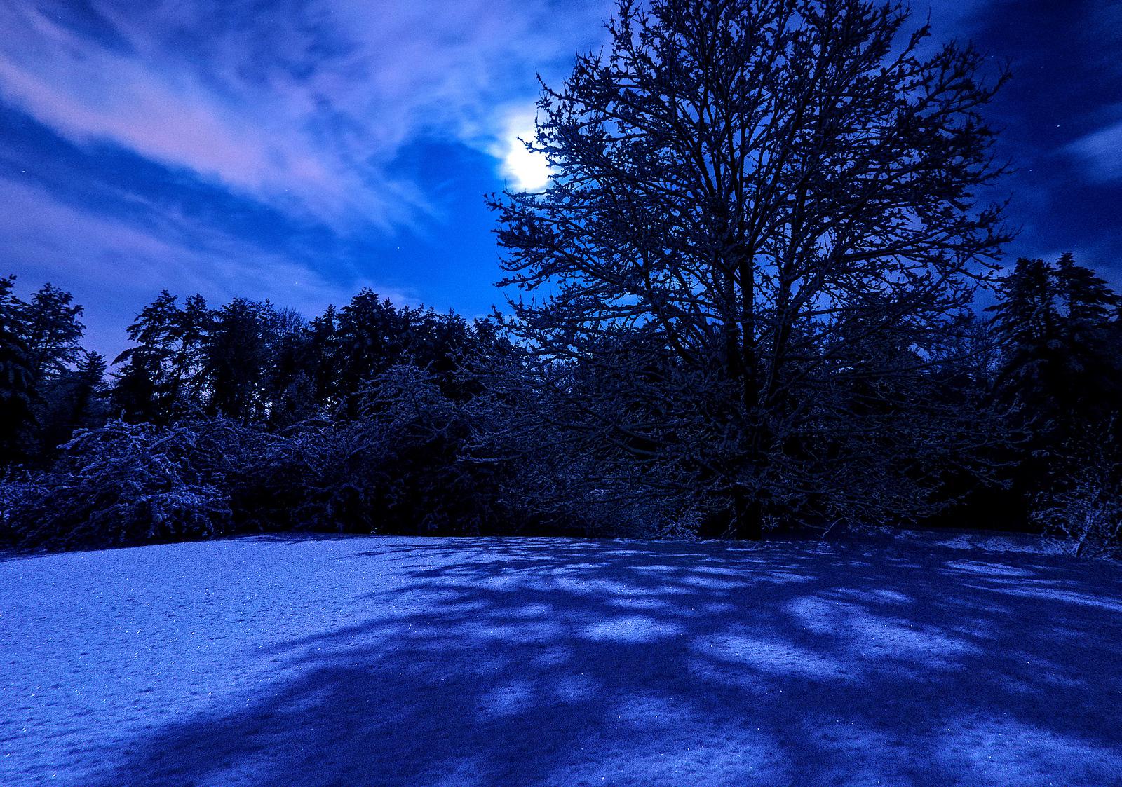 Moonlight and fresh snow