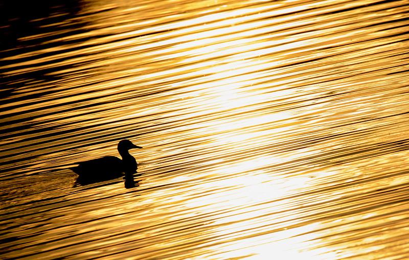Profound Image Photography