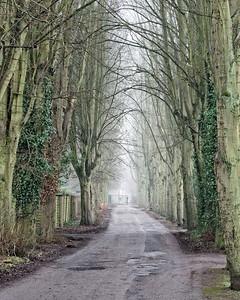misty lane