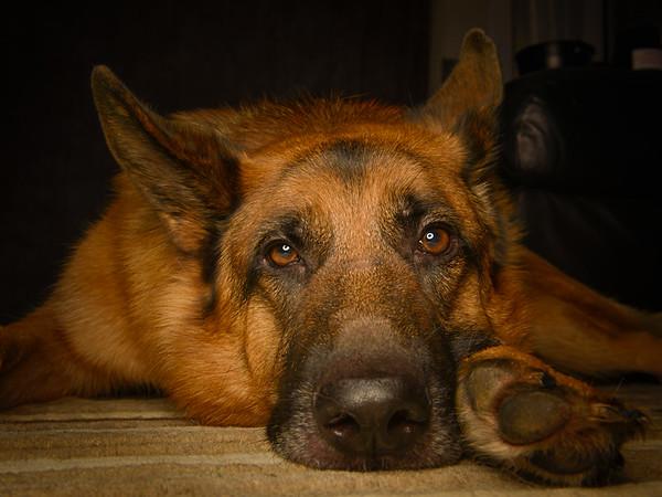 Stunning Dog Portrait