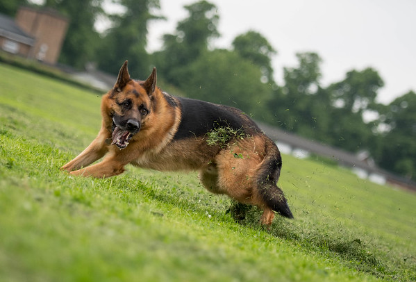 Photographing dogs in action