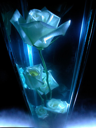 flor branca  no vaso-2500px