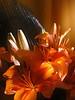 flor 6-2500px