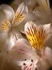 flores brancas 1a-2500px