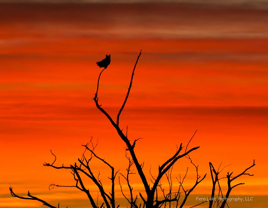 """Dawn's Silent Guardian"" - Image #DSE3896"