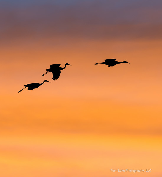"""""""Gliding Home"""" - Image# DSF0246"""
