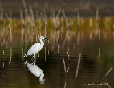 """""""Stalking the Reed Forest"""" - Image #C03_7785"""