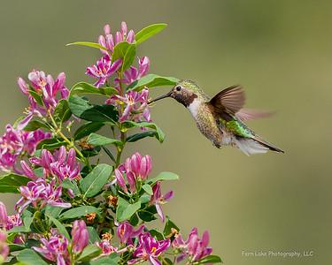 """Summer Nectar"" - Image #C02_3645"