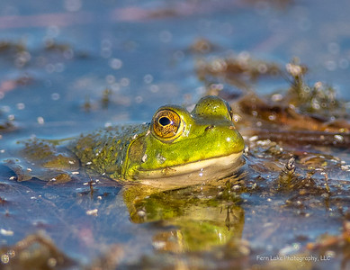 """Frog's Eye View"" - Image #C03_2134"