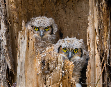 """""""Owl Eyes"""" - Image #_B011101"""