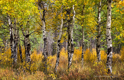 """Many Layers of Autumn"" - Image #C03_4979"
