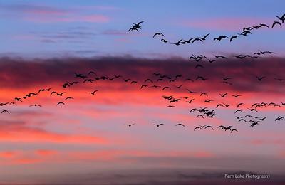 """Daybreak"" - Image #C04_0268"