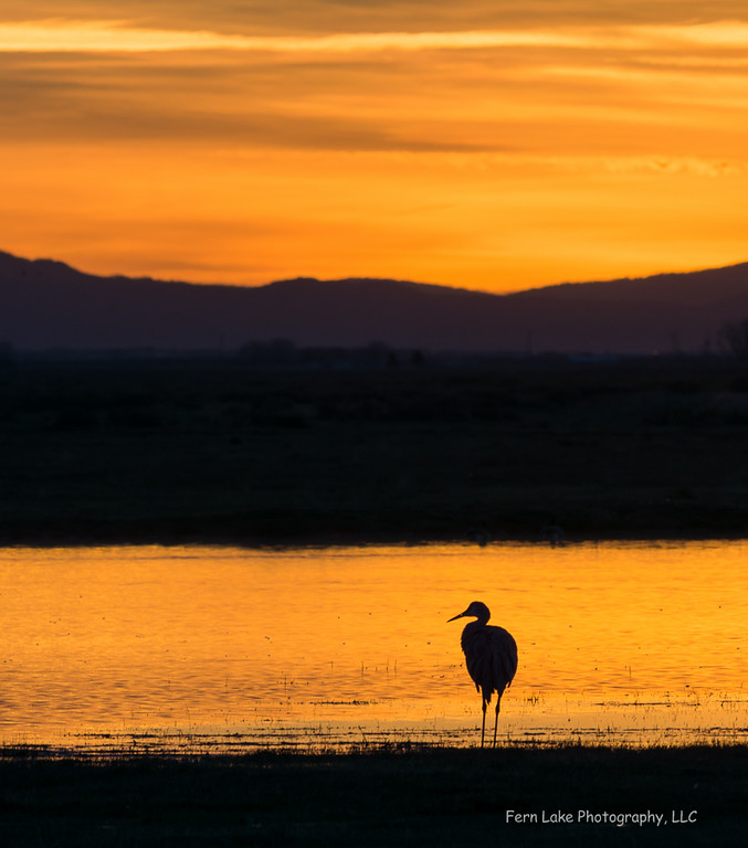 """Sunrise Silhouette"" - Image# B009430"