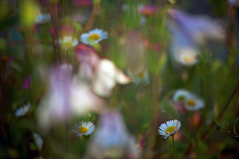 Private garden, Cornwall