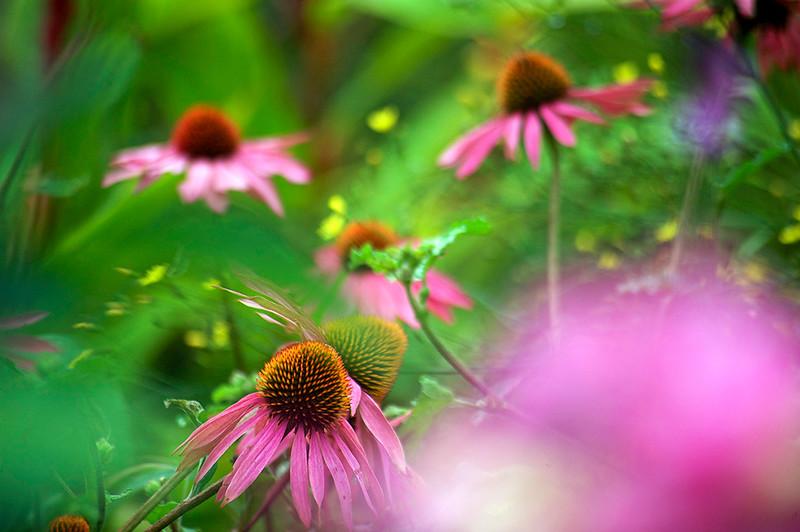 Private garden, Somerset