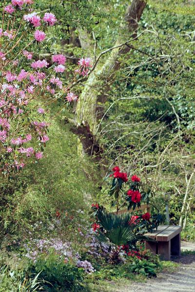 Tremenheere Sculpture Garden, Cornwall