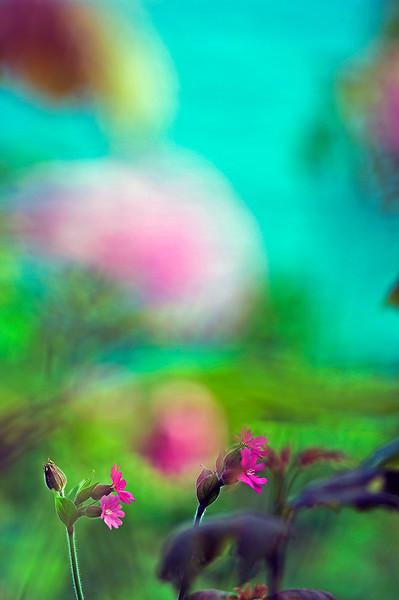 Floral Sea 2