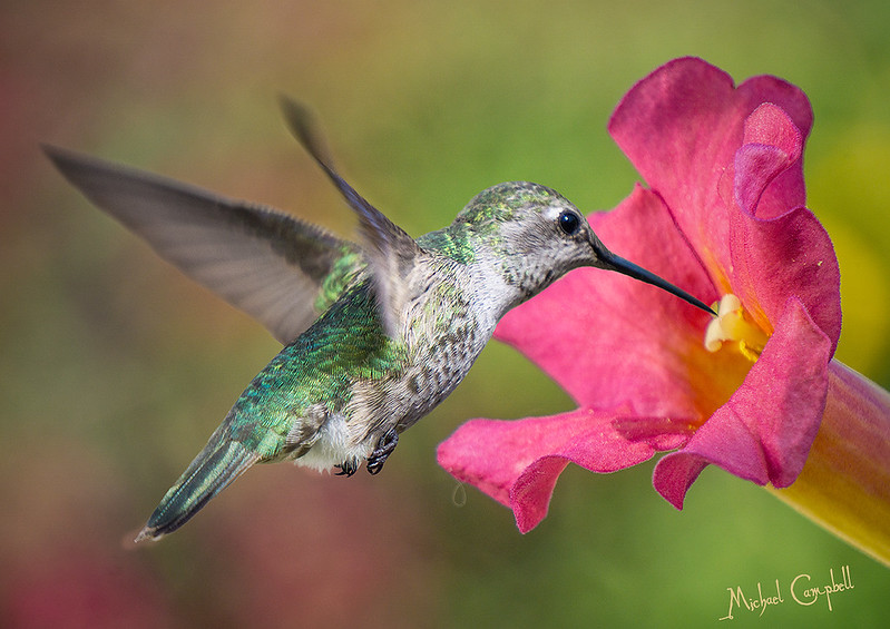 HB--w-flower-1474-900