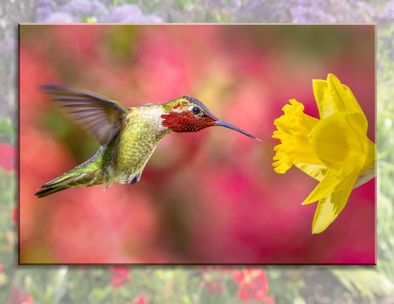 HUMMINGBIRD 06