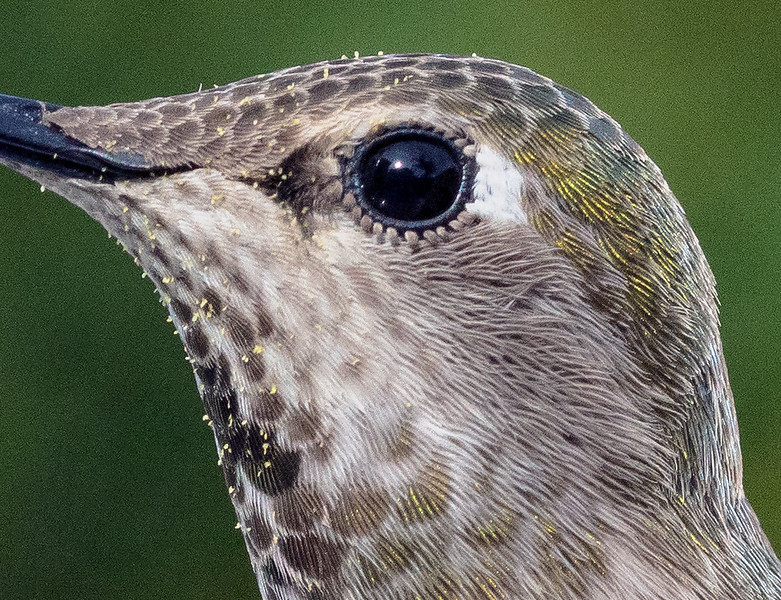 hummingbird-50410-detail
