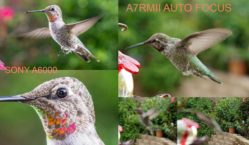 A7RII-AUTOFOCUS-