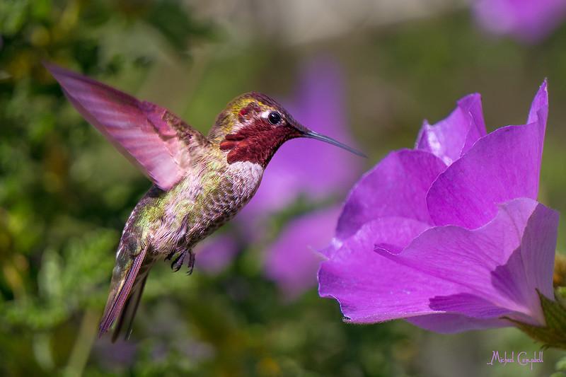 HB-purple-flwr-2738-