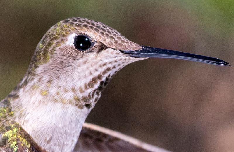 Humming Bird 659853 crop