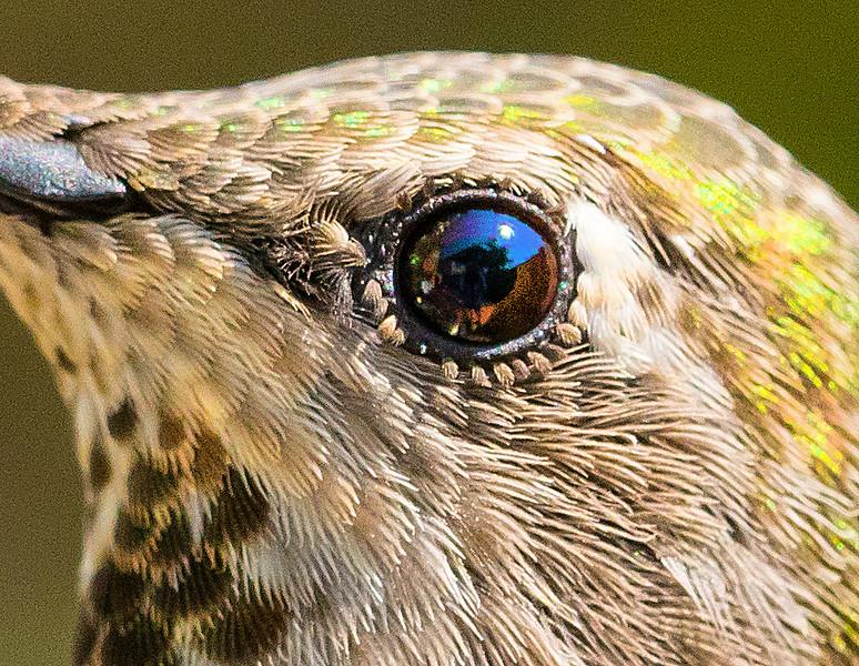 H-B8104-eye-detail-