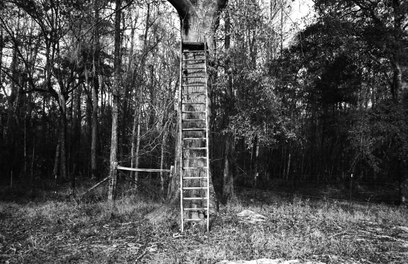 Deer Stand, Charleston South Carolina