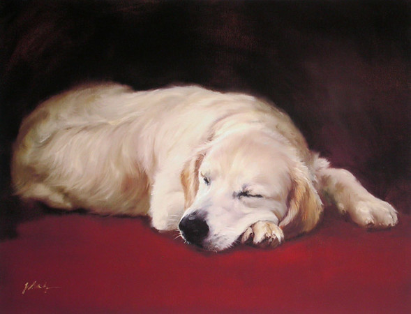 Stanhope - Golden Retriever L